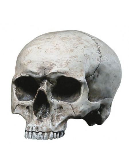 Markus Mayer Human Skull Crâne décoratif standard