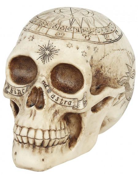 Nemesis Now Crâne Astrologique Crâne décoratif Standard